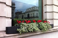 red cyclamen Fall Window Boxes, Gardens, Exterior, Flowers, Plants, Red, Design, Florals, Planters