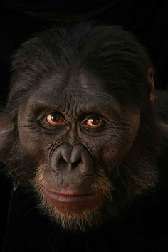 Ancient ancestors come to life | Smithsonian Science   #anthropology