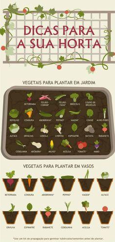 Guia ilustrado: Como criar uma Plantação de Legumes em casa