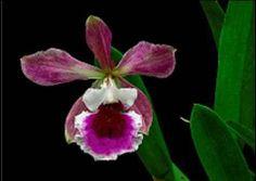 Rompiendo Muros: Una orquídea Free for fivepara los Cinco  2014.05....