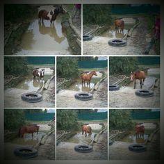 Paddock Trail Müller Kneipbad für Pferde oder man kombiniere das notwendige mit dem nützlichen mit dem praktischen und dann kommt eine Pferdeschwemme dabei raus. Wir haben Rohrkolben angepflanzt, es reinigt das Wasser. Einige Pferde gehen gezielt an der Tränke vorbei um hier zu trinken.