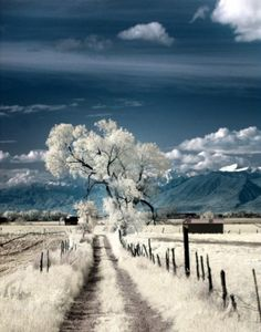 White Grass, White Tree, White Snow on Mountains