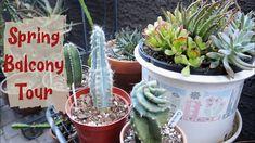 Spring Balcony tour | Succulent and Cacti Tour Warm Spring, Balcony Garden, Cacti, Container Gardening, House Plants, Sassy, Planter Pots, The Creator, Succulents