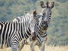 Wessa uMngeni Valley Nature Reserve and Education Centre - Howick, KwaZulu-Natal Self Development Courses, Outdoor Education, Kwazulu Natal, Education Center, Nature Reserve, The Great Outdoors, South Africa, Centre, Adventure