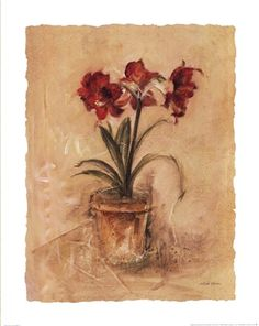 Secret Amaryllis II by Cheri Blum art print