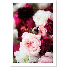 Domino Roses Ii 20 x14 ($36) ❤ liked on Polyvore featuring home, home decor, wall art, backgrounds, flowers, photos, filler, posters, photo canvas wall art and white rose wall art