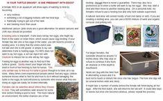 Is my turtle gravid? Turtle Care, Aquatic Turtles, Red Eared Slider, Egg Nest, Sliders, Jr, Lisa, Knowledge, Posters