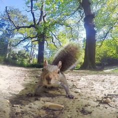 These guys are always so curious. Squirrel Pictures, Little Critter, Animals Images, Chipmunks, High Quality Images, Gopro, Animal Kingdom, Kangaroo, Wildlife