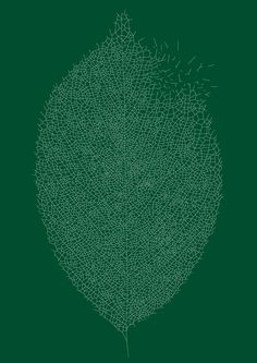 Leaf. Sasaki Shun.