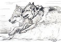 Wolves running sketch by *silvercrossfox How to draw Wolves, , how to draw animals, drawing realistic wolves, wolf, sketch, draw, tutorial, sketchbook,wolf, wolves, pack, art teacher, art lesson, wolf picture, wildlife sketchbook