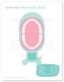 turtle soup: Baby Tooth Chart