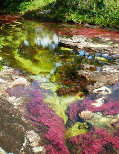 "Sometimes called ""the river that ran away from paradise"", Caño Cristales River, Colombia (by Ma Fee)."