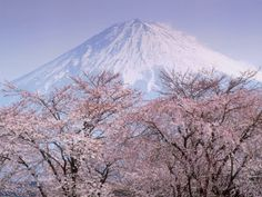 Mt. Fuji, Japan when the cherry blossoms are in bloom of course