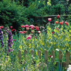 Flowers That Plant Themselves   Sure, they're called annuals, but buy their seeds once, and you'll have blooms year after year. Check out our favorite blooms that come back.   SouthernLiving.com