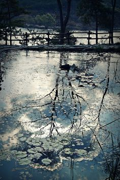 Icy tree reflection.