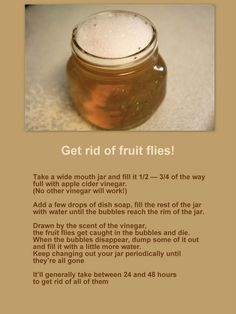 Natural Garden Pest Control How to get rid of fruit flies – tried this tonight and it so works! Fruit Flies In House, Diy Pest Control, Bug Control, Insecticide, Natural Garden, Insect Repellent, Natural Cleaning Products, Do It Yourself Home, Organic Gardening