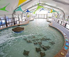10 Things to Do with Kids In Chicago, Illinois: 2. See the Fishes (via Parents.com)