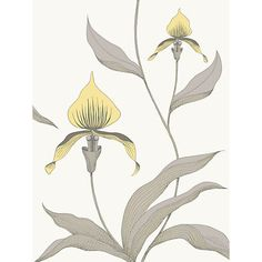 Cole & Son Orchid Wallpaper, Yellow on White, 95/10057