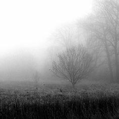 Cold and foggy #winterday at the river #Elbe. #winter #elbmarsch #hamburg #schleswigholstein #bw