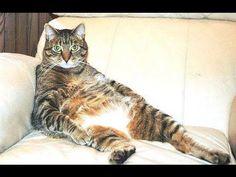 10 gatos sentados como personas... ¡qué comodones!