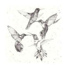 Humming bird sketch hummingbird drawing art prints 55 ideas for 2019 Bird Tattoo Meaning, Tattoos With Meaning, Bird Drawings, Animal Drawings, Drawing Birds, Tattoo Sketches, Drawing Sketches, Drawing Art, Colombe Tattoo