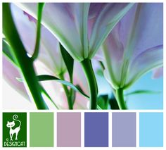 Lilly Stalks - Blue, Turquoise, Tiffany, Denim, Lilac, Green, leaf, sage Designcat Colour Inspiration Board