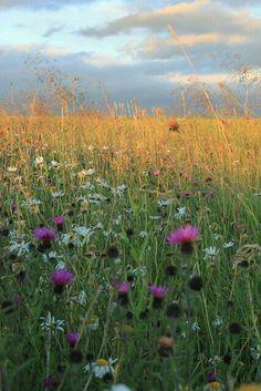 .wildflowers.            t