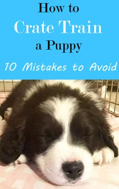 new puppy Crate training can be easy if you can avoid these 10 common mistakes people make as they learn how to crate train a puppy. Puppy Training Tips, Training Your Dog, Puppy Crate Training Schedule, Brain Training, Therapy Dog Training, Training Videos, Crate Training Puppies, House Training A Puppy, Clicker Training Puppy