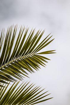Palm by bpb photo on @creativemarket