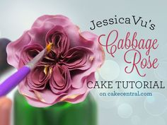 "Known for their ""one hundred-petaled,"" cabbage-like blooms, cabbage roses like the ones seen on JessicaVu 's&..."