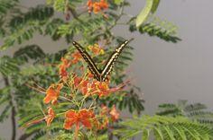 A butterfly in Brazil.