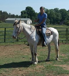 Freckles - Other  Appaloosa Mare in Seneca, South Carolina 29678
