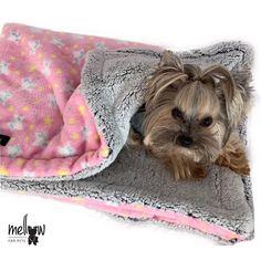 Cobijas para princesas   suaves y calientitas Yorkie, Twitter, Dogs, Photos, Princesses, Animales, Yorkies, Pictures, Yorkshire Terrier