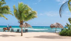 Compare Travel Prices, book trips and save you money. Our site will entice you & your family to travel more often and get the best travel deals. Jamaica Resorts, Jamaica Vacation, Hotels And Resorts, Cheap International Flights, Flight And Hotel, All Inclusive, Vacation Packages, Travel Deals, Caribbean