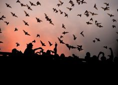 It's an unforgettable sight to see and it's FREE!  Watch the sky come alive with millions of bats every night at dusk at The Congress Avenue bridge in downtown Austin TX.  Check the article for more info.