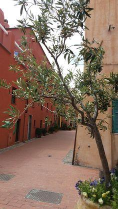 Giugno 2017. Varigotti. Liguria. Italy.