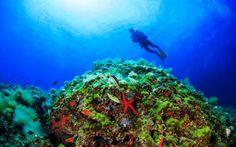 #Taucher in der #Unterwasserwelt des #roten #Meeres © shutterstock