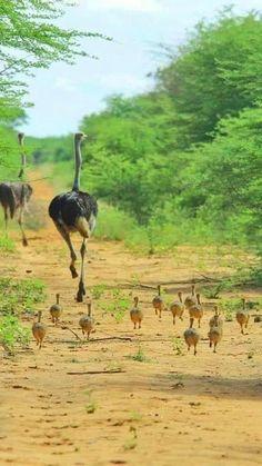 Nature Animals, Animals And Pets, Beautiful Birds, Animals Beautiful, Animal Kingdom, Cute Baby Animals, Funny Animals, Baby Wild Animals, Amazing Animals