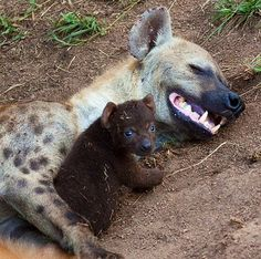 Hyena Offspring 1000+ images about SPE...