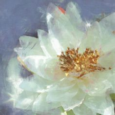 Lily Pond 2 by Noah Bay Painting Print on Wrapped Canvas