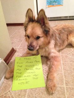 People have resorted to punishing their misbehaved pooches by posting dog shaming photos online, and these top 50 will make you pee your pants laughing! Funny Animal Jokes, Dog Quotes Funny, Funny Animal Videos, Cute Funny Animals, Animal Memes, Cute Baby Animals, Funny Dogs, Cute Dog Memes, Dog Shaming Photos