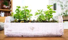 Curso on-line e gratuito mostra como criar hortas em espaços pequenos
