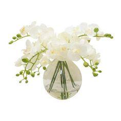 "14"" Phalaenopsis in Glass Vase, White by One Kings Lane $369"