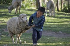 A little boy pulling a sheep in a small village in the Peruvian Andes. The sheep is not amused :-)