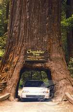 Kings Canyon National Park,  California 2001