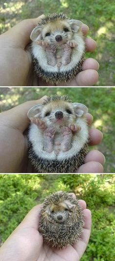 Baby animals are so cute!