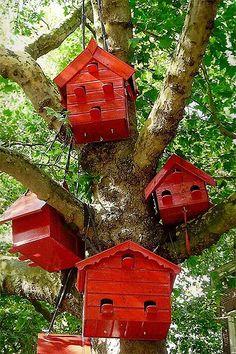 Red Bird House Community