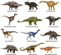 40 Ideas De Los Dinosaurios Dinosaurios Mapa De Espana Dinosaurios Imagenes Imágenes de varios dinosaurios acompañados de su nombre escrito en mayúsucula y de una foto de su esqueleto. 40 ideas de los dinosaurios