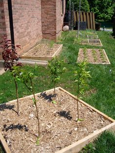 Fruit tree planting for backyard orchards