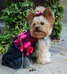 Magenta Blossoms Dog Harness.  https://www.facebook.com/RLCouture